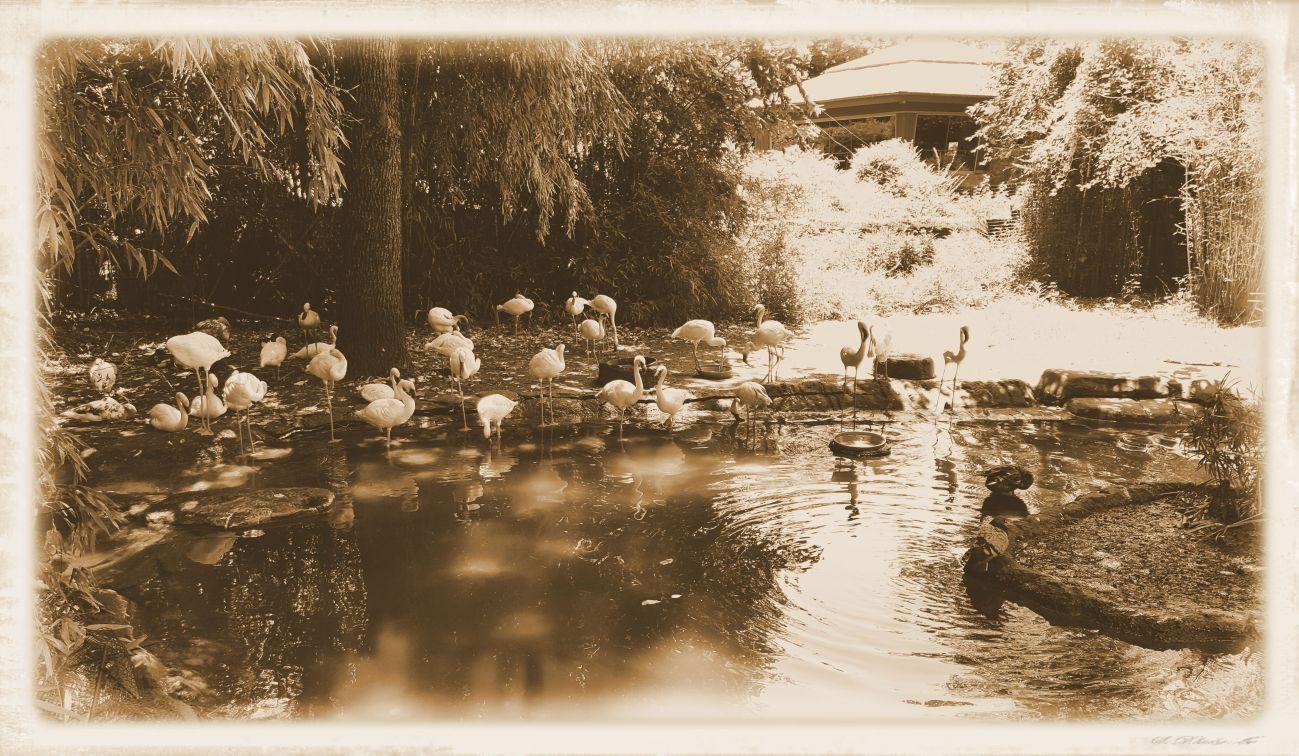flamingos-dallas-zoo-07062016-2